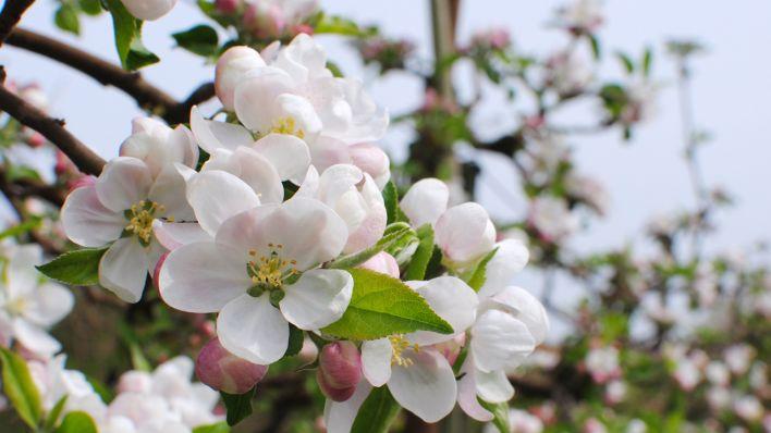 Blütenpracht wohin man schaut in diesem jahr entzücken die