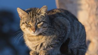 KAtze sitzt in de rSonne, Quelle: imago/Science Photo Library