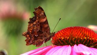 Schmetterling (Quelle: rbb)