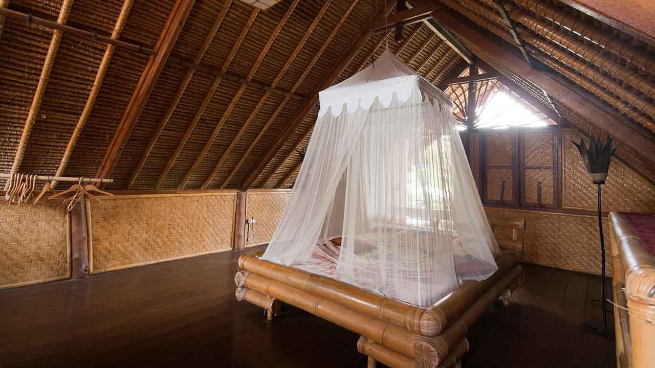 wie gef hrlich sind zika dengue co rbb rundfunk. Black Bedroom Furniture Sets. Home Design Ideas