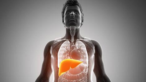 Nicht-alkoholische Fettleber - Wenn die Leber ihr Fett wegkriegt | rbb