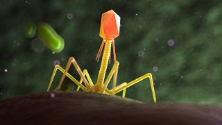 Illustration eine Phage (Quelle: imago/Science Photo Library)