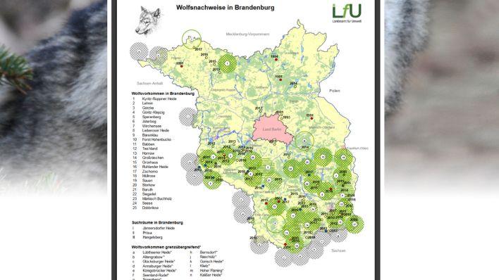 Wölfe In Brandenburg Karte.Wolfskarte Des Lfu Rbb