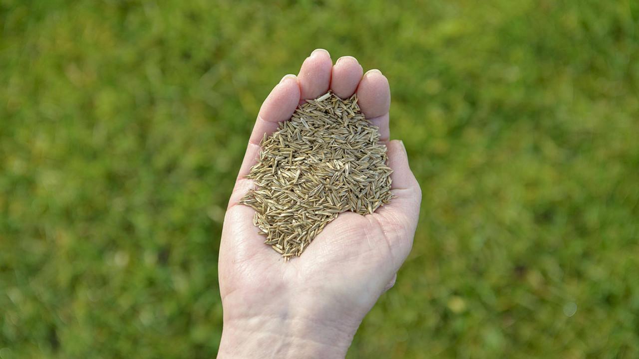Rasensamen Berliner Tiergarten 20 kg Gras Samen Sport Spiel Rasen Saatgut Wiese