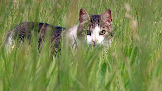 Tier zuliebe - Die Reportage, Quelle: rbb