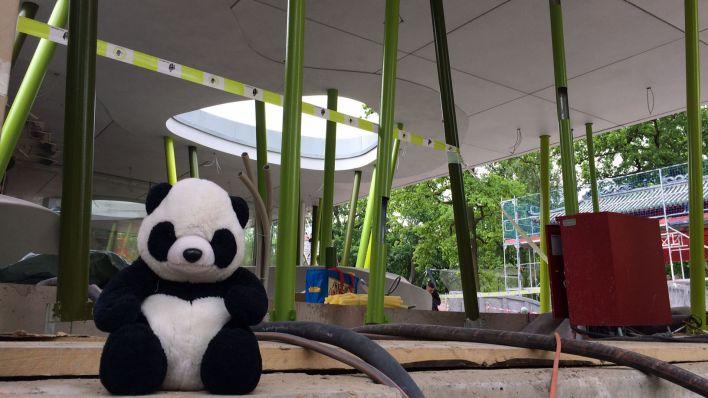 Pandas für Berliner Zoo fliegen Ende Juni ein