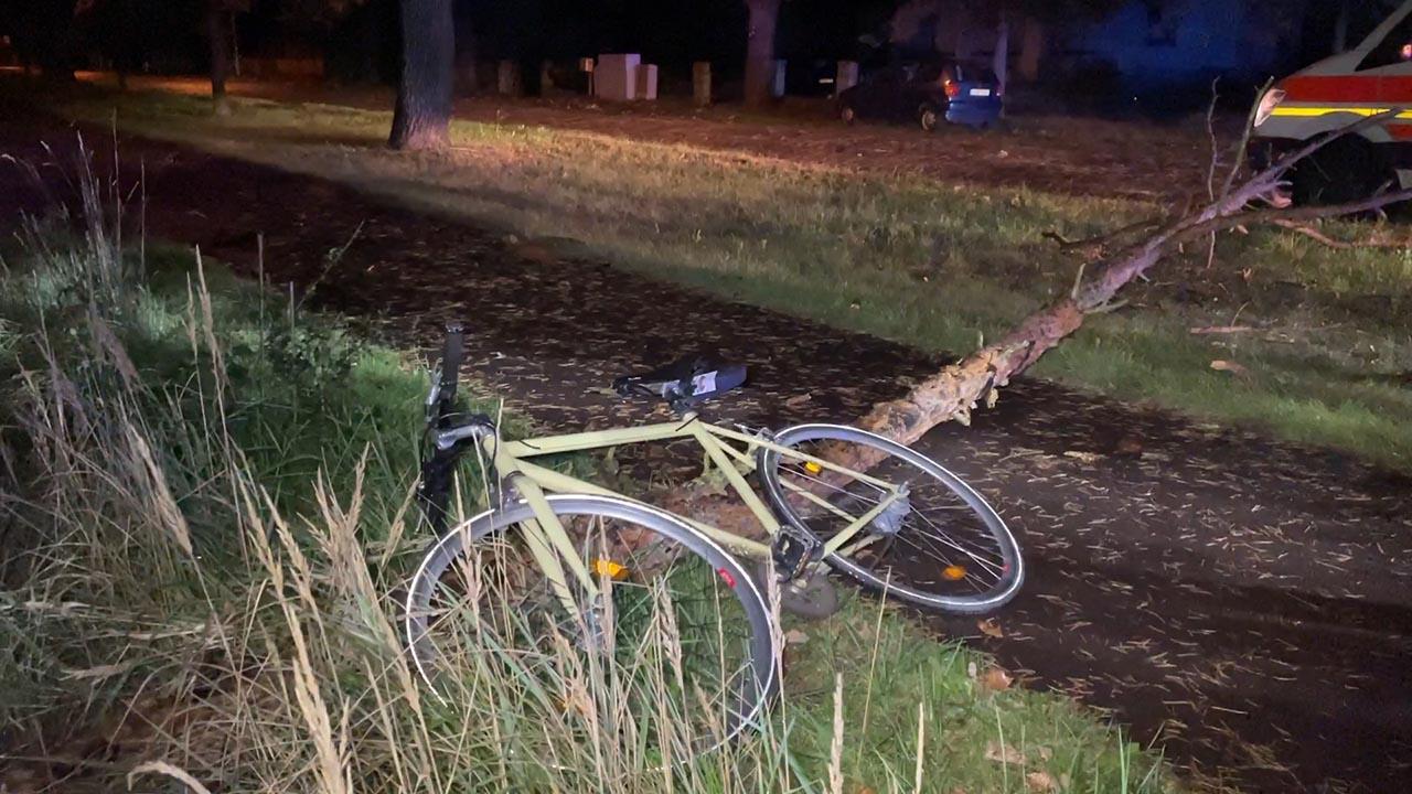 Baum stürzt auf Radfahrer in Brandenburg an der Havel (Quelle: TNN)