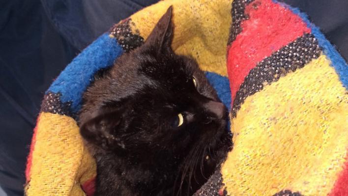 Aufpäppeln säugende katze Rinderfettpulver Katze