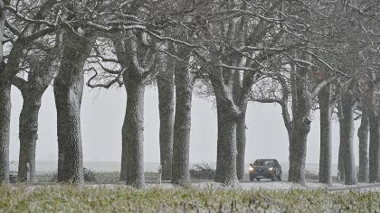 Ein Pkw fährt am 23.01.2021 im trüben Winterwetter auf einer leicht verschneiten Allee im Landkreis Oder-Spree in Ostbrandenburg. (Quelle: dpa/Patrick Pleul)   dpa/Patrick Pleul
