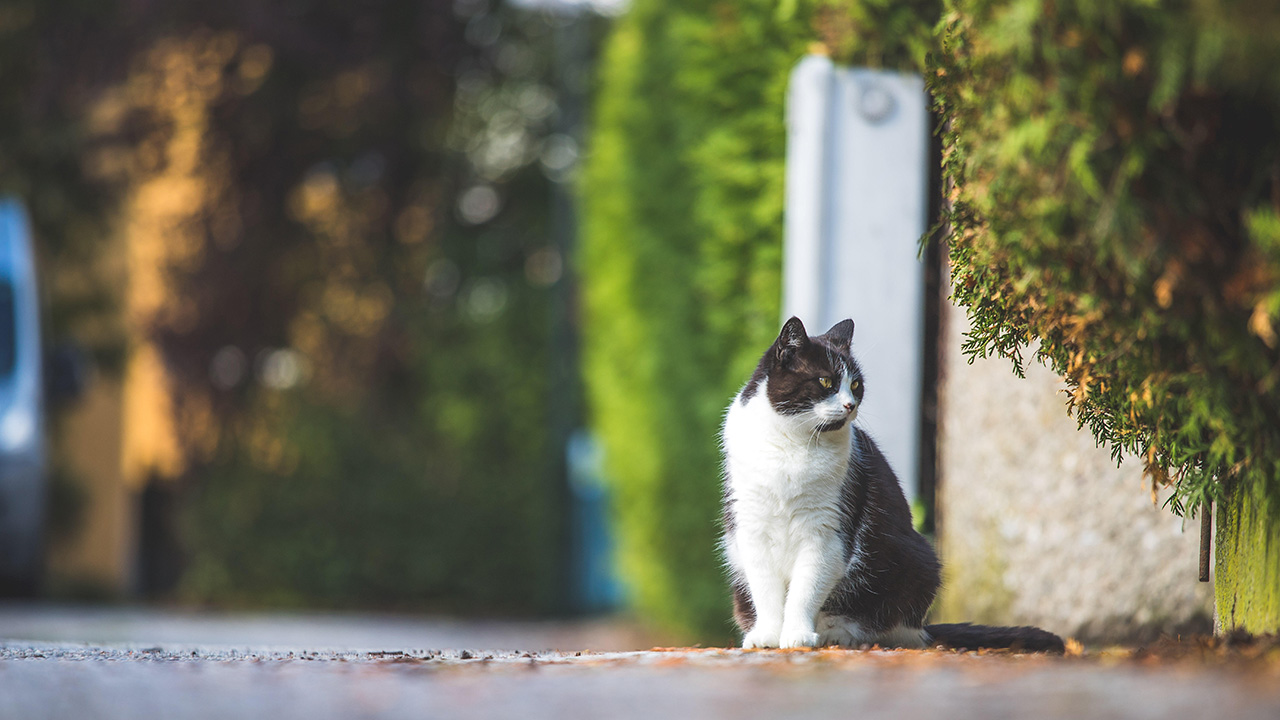 Eine schwarz-weiße Katze sitzt an einem Gehweg. Quelle: dpa/Patrick Daxenbichler