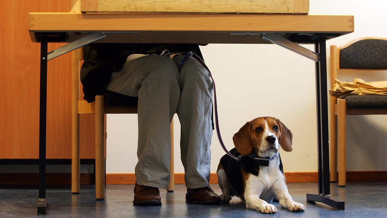 Archivbild: Ein Wähler mit seinem Hund gibt am 17.09.2006 in Berlin hinter der Wahlkabine seine Stimme ab. (Quelle: dpa/Gero Breloer)