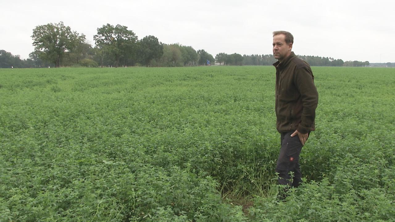 Robert Häußler steht auf seinem Feld, wo eine Solaranlage entstehen soll (Quelle: rbb)